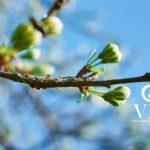 La energía de la primavera